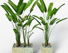 Banana Plant 3D