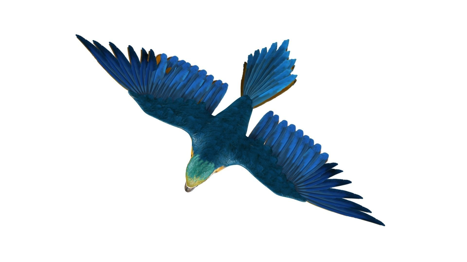 Gold Macaw