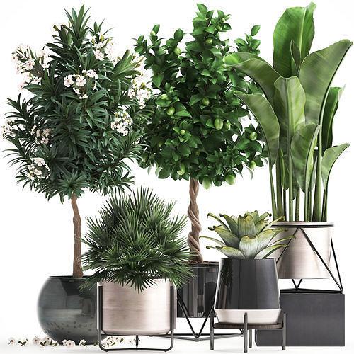 collection of ornamental plants 3d model max obj mtl fbx 1