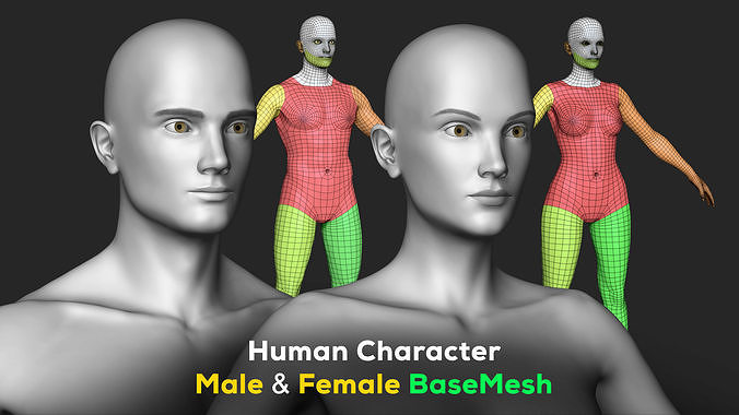 human character - female and male basemesh pack - woman and man 3d model max obj mtl fbx ztl 1