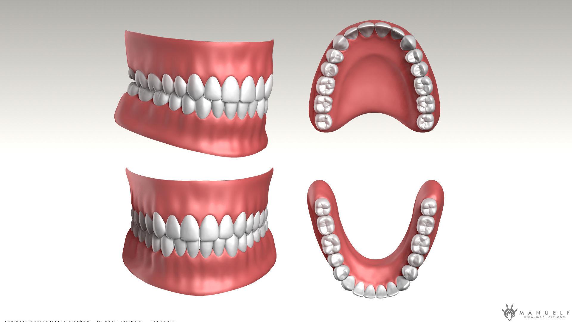 Highpoly Human Teeth set