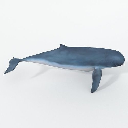 irrawaddy dolphin 3d model low-poly obj mtl 3ds fbx stl blend dae 1