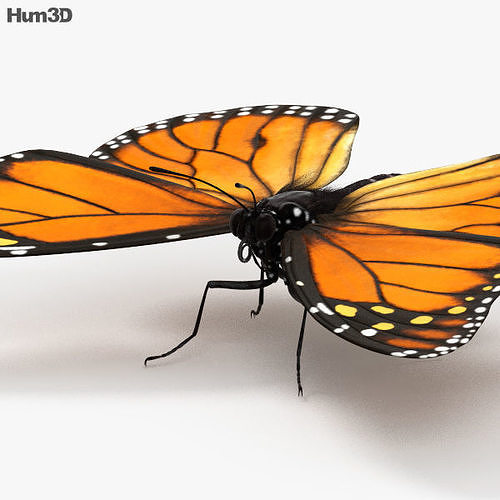 monarch butterfly 3d model max obj mtl 3ds fbx c4d lwo lw lws 1