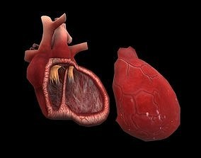 Heart Medical Science 3D model