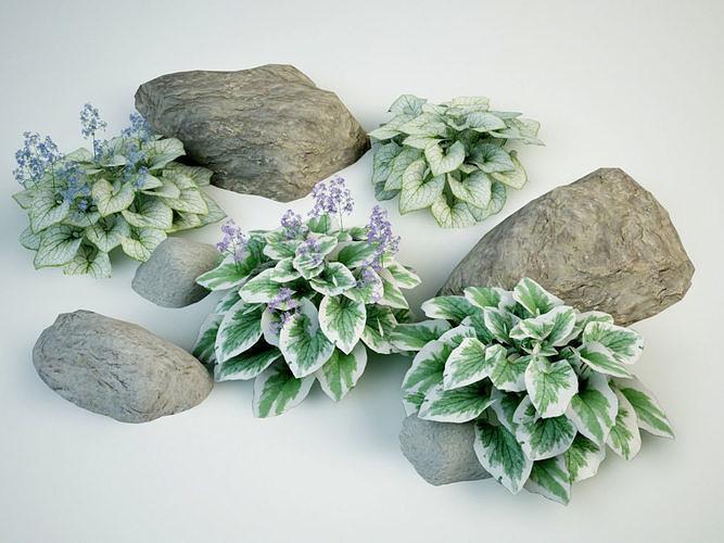 brunnera macrophylla siberian bugloss 3d model max obj mtl 3ds fbx 1