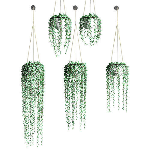 hanging succulents in hanging pots - 5 models 3d model max obj mtl fbx 1