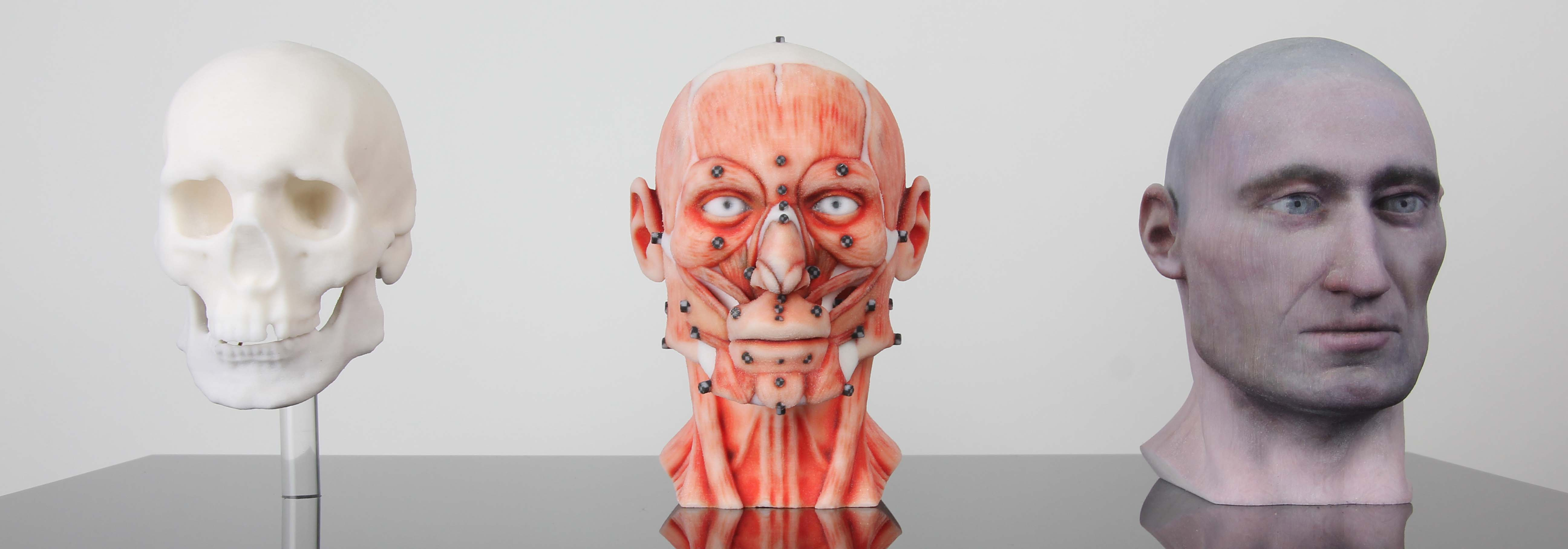 Cranial Facial Reconstruction European Male Facial Muscle 3d Model
