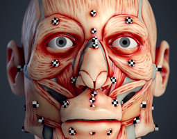 cranial facial reconstruction - european male facial muscle 3d print model