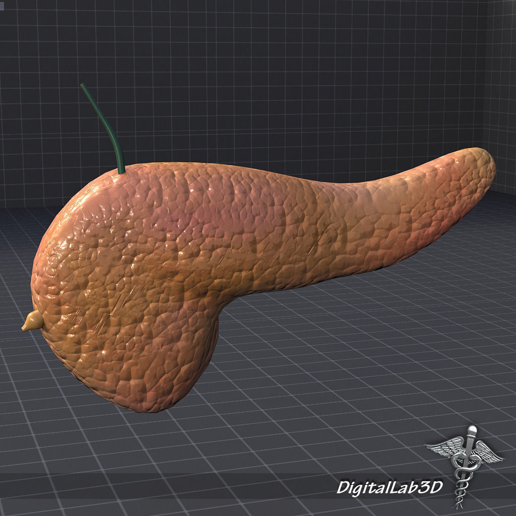 3D model Pancreas External | CGTrader