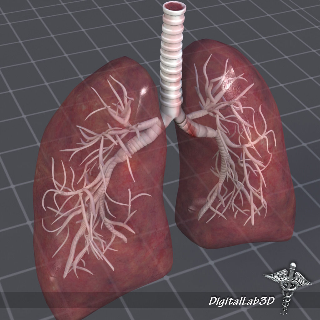 Lung 3d Diagram Great Installation Of Wiring Diagram