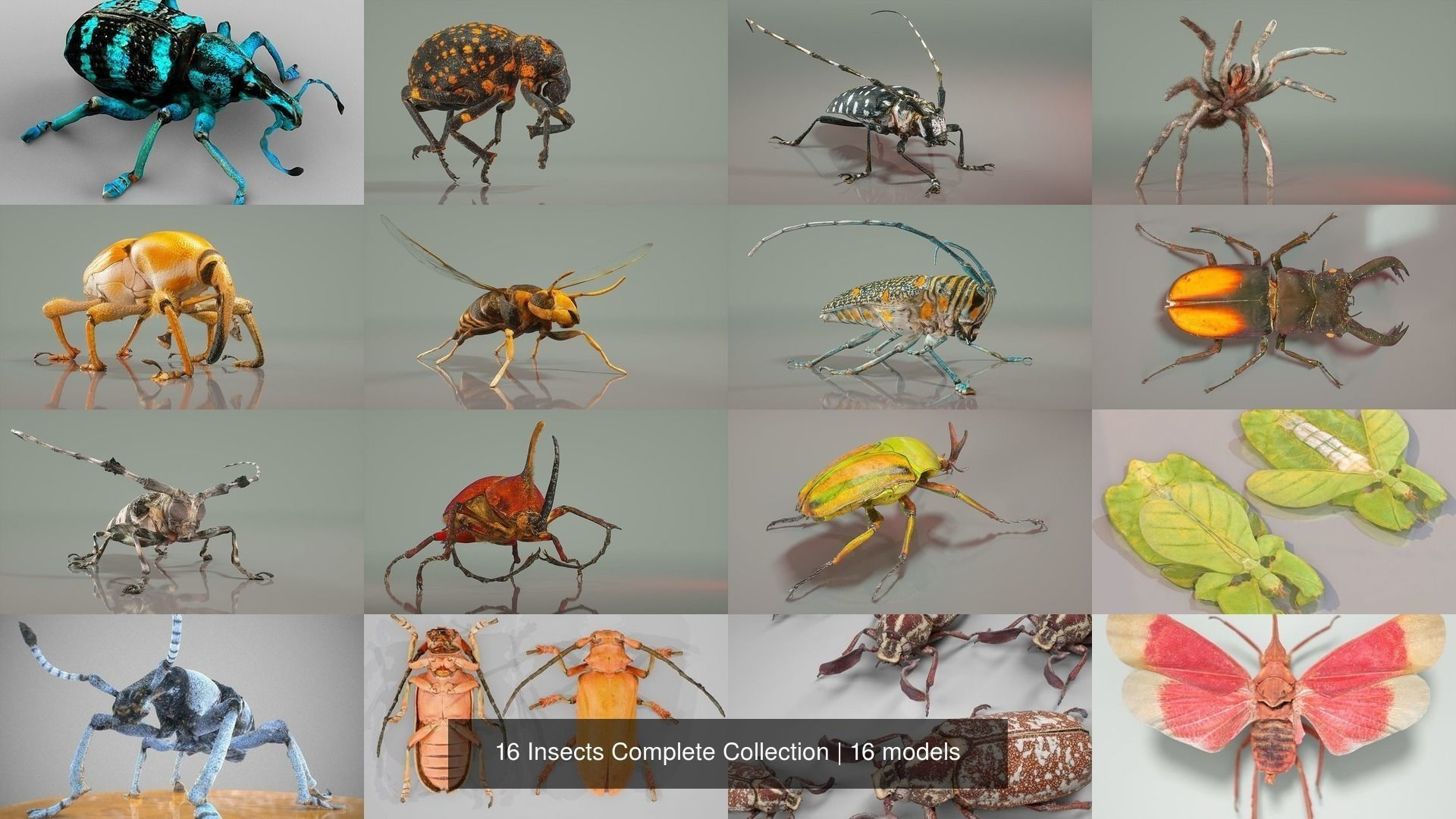 16 Insects Complete Collection
