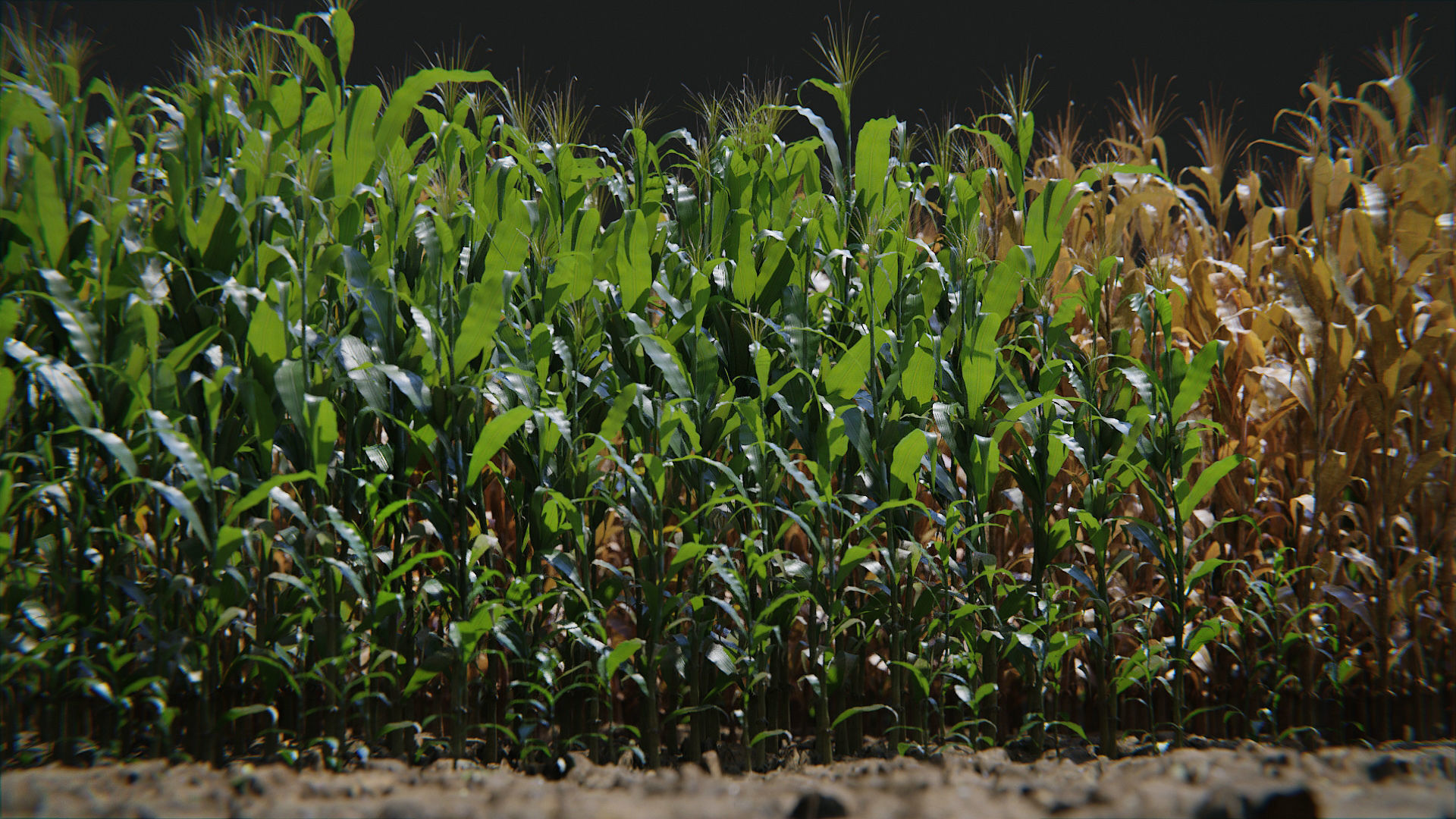 Corn Plants 15 Types in 5 Ages - PBR AssetKit