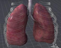 lungs external 3d