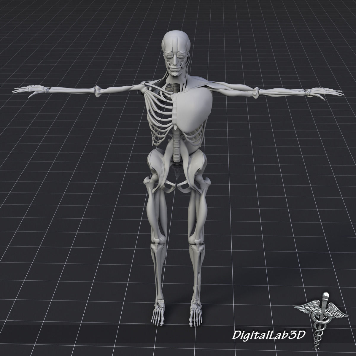 3d Human Muscle And Bone Structure Cgtrader