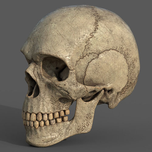 ancient skull pbr workflow 3d model obj mtl fbx c4d blend 1