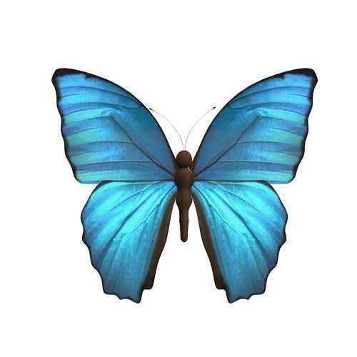 butterfly model 3d model obj mtl fbx ma mb 1