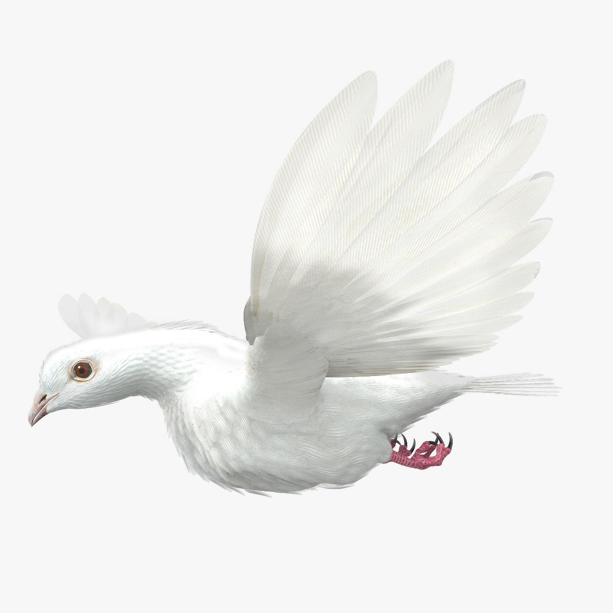 Dove - rigged - animated