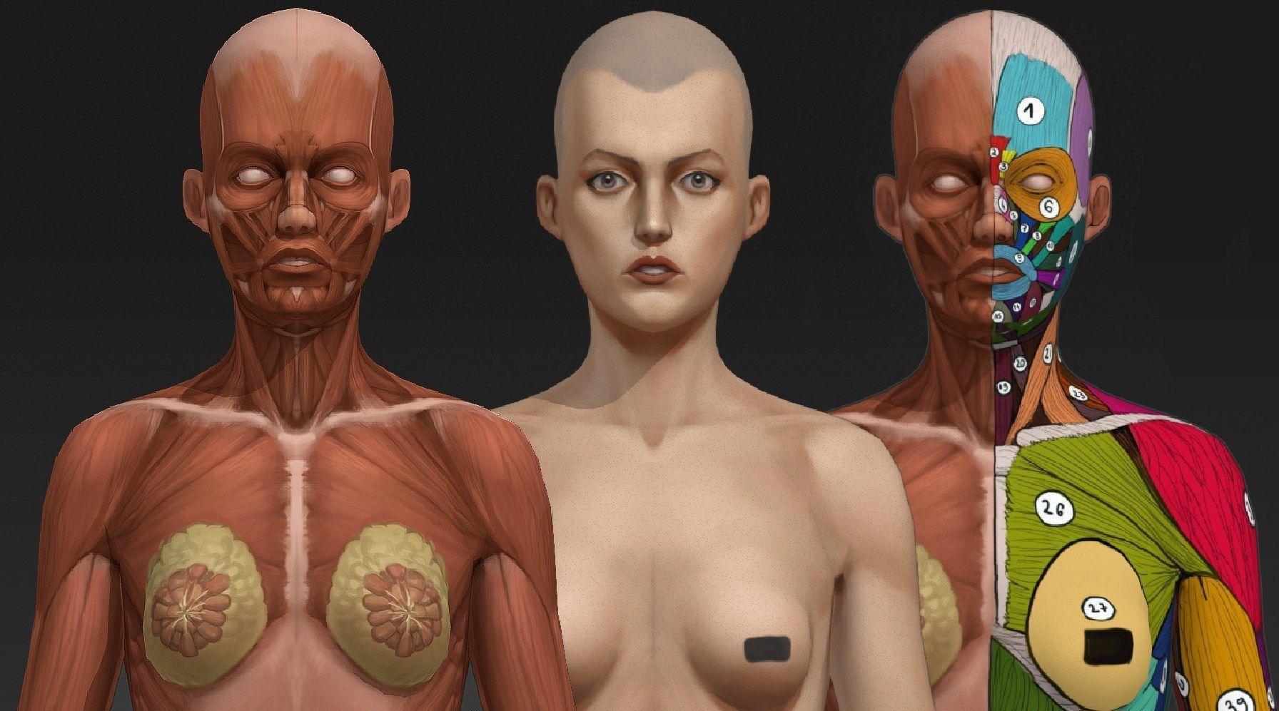Woman anatomy study