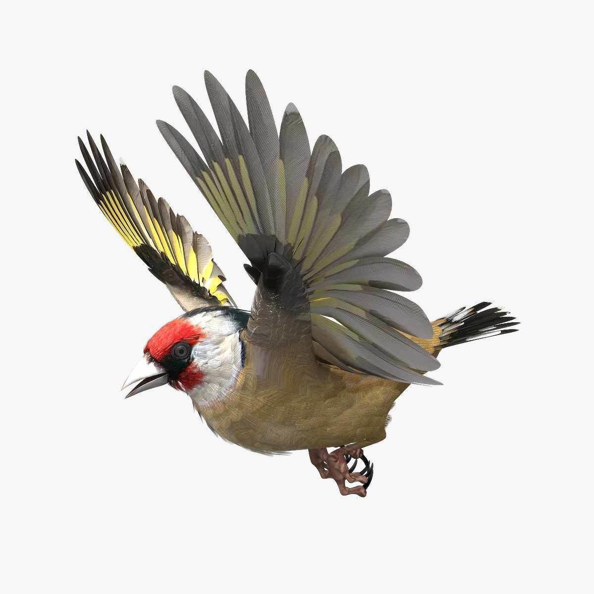 European Goldfinch - rigged - animated