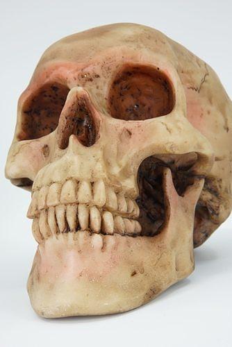 realistic - human skull 3d model obj mtl fbx ply 1 ...