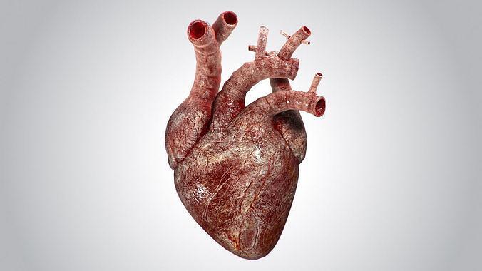 heart bloody rigged animated pbr 3d model max obj mtl fbx 1