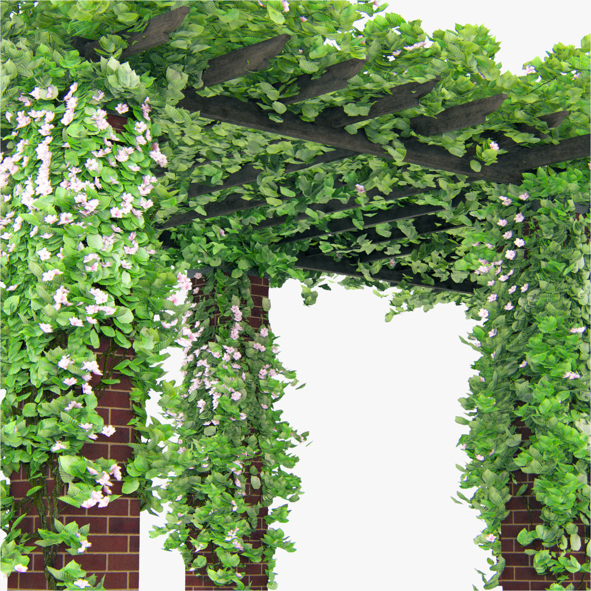 100 good climbing plants for pergolas best climbing plants for pergolas and trellises - Pergola climbing plants under natures roof ...