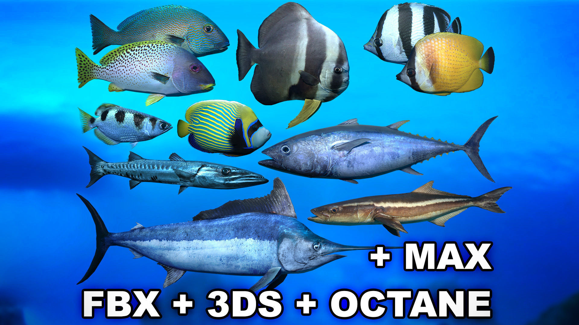 Ocean Fish Package