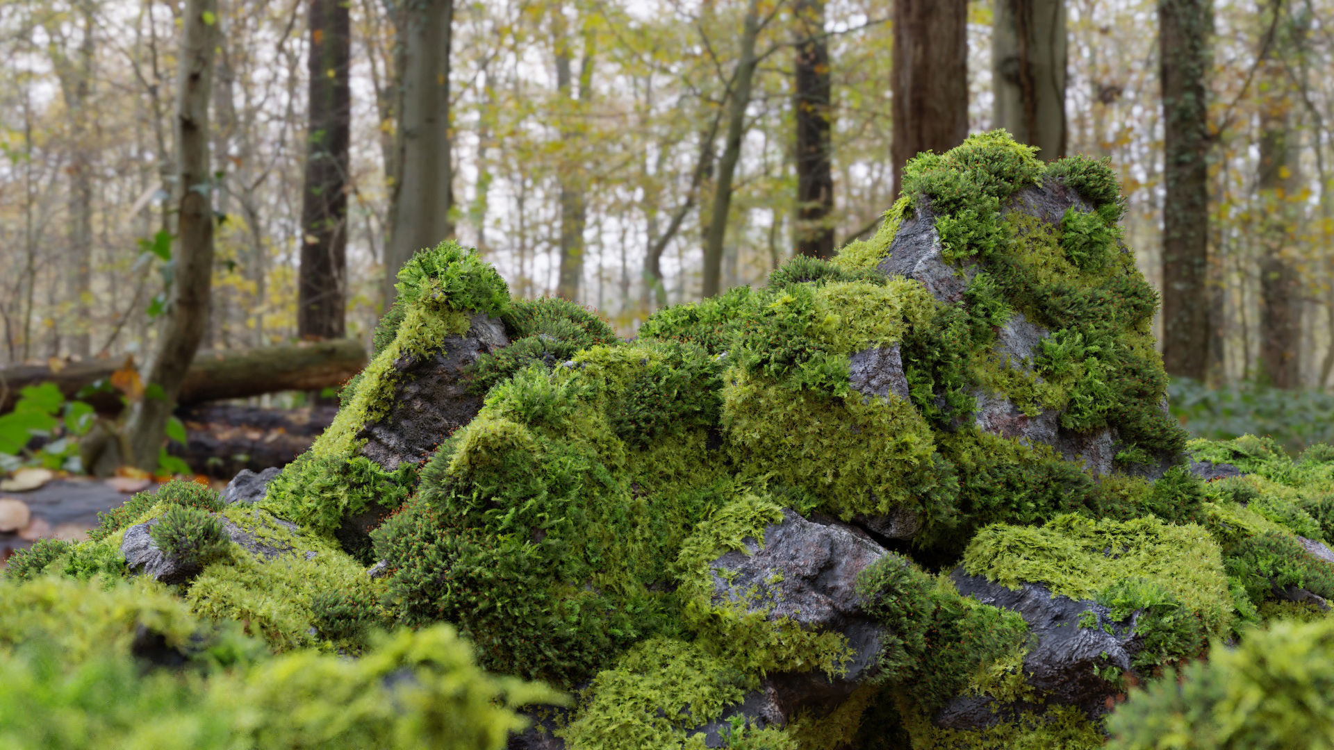 Moss 7 Species and Stones - PBR Asset Kit