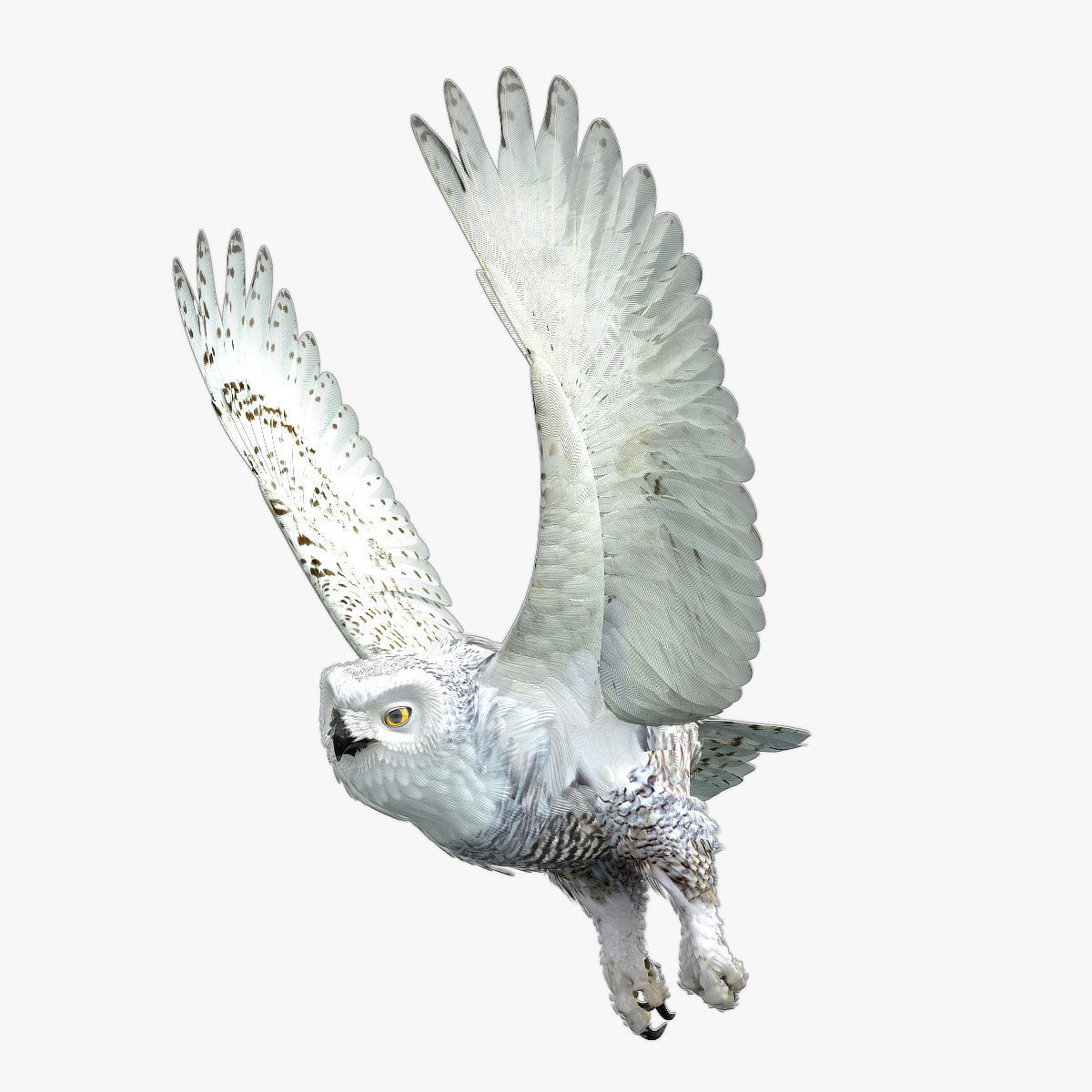 Snowy Owl - rigged - animated
