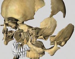 Human Hi-Res Skull 3D Model