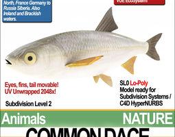 common dace 3d model obj 3ds c4d vue