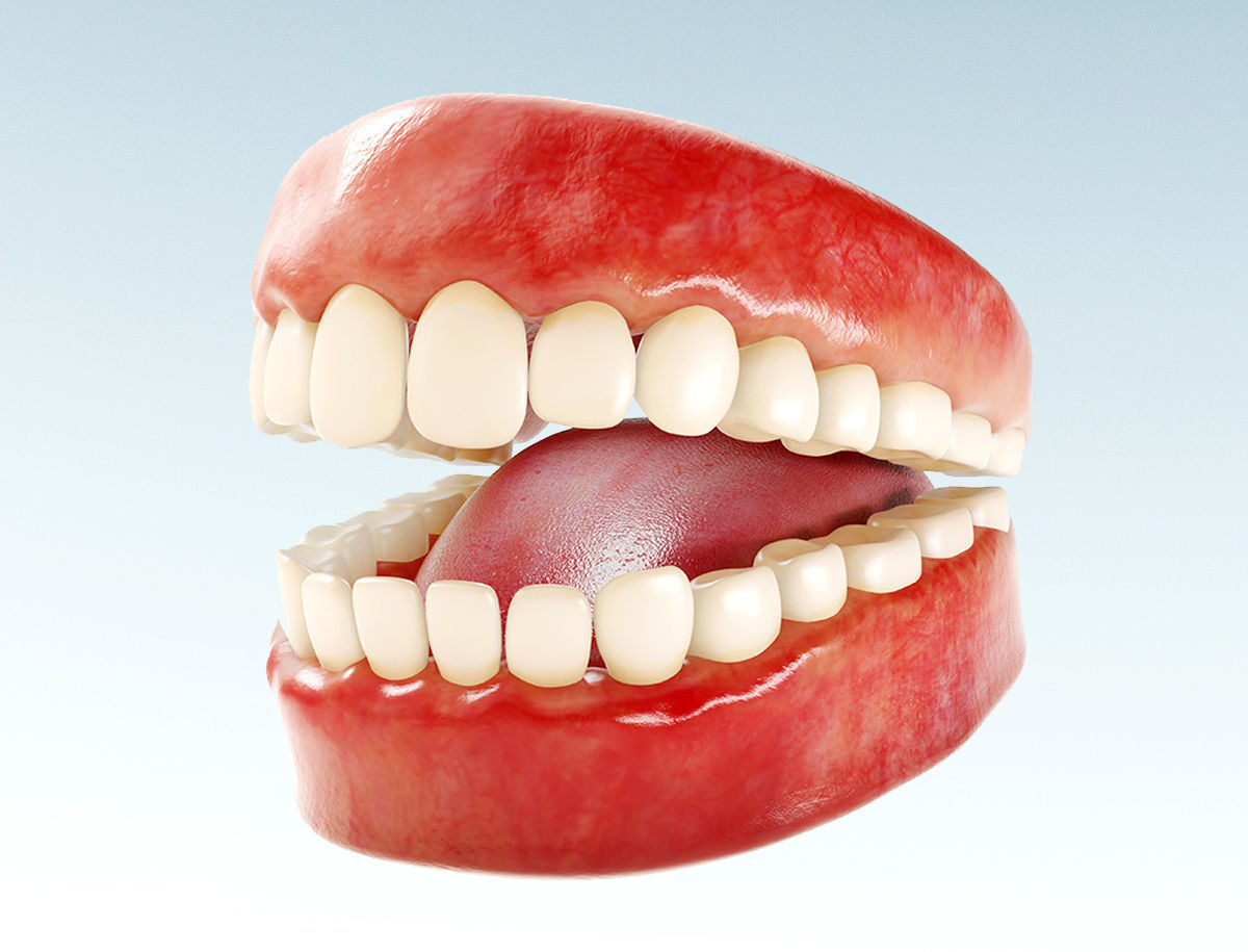Realistic human Teeth - Mouth for character Low-poly 3D model