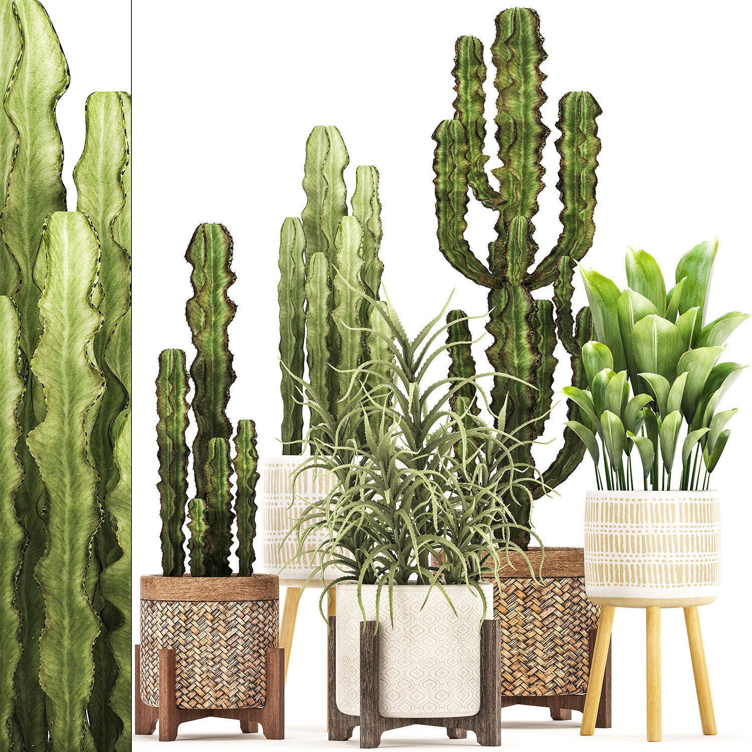 Collection of Exotic Cactus Plants 7