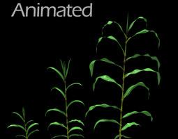 3D Corn Plant Growth