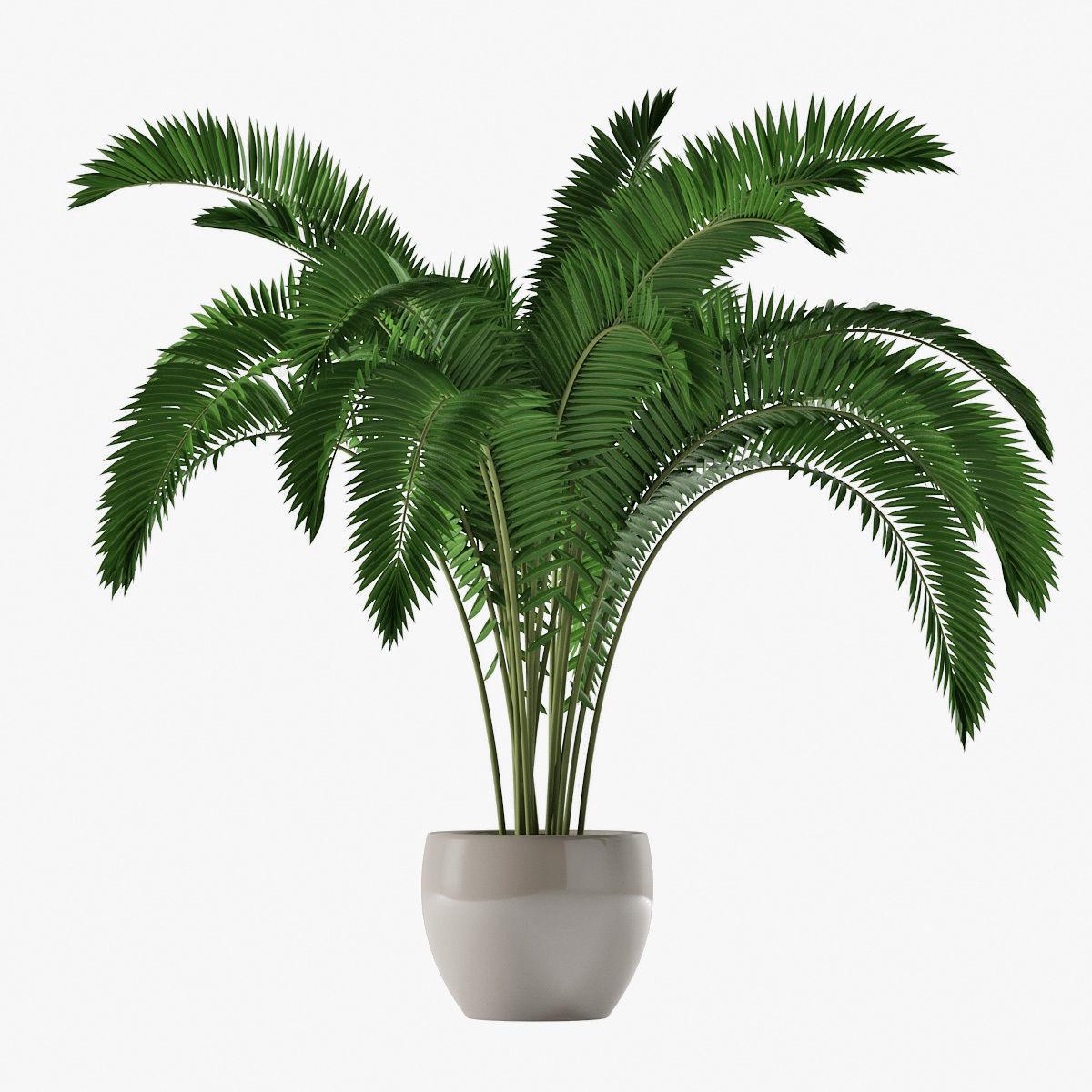 Palm 07