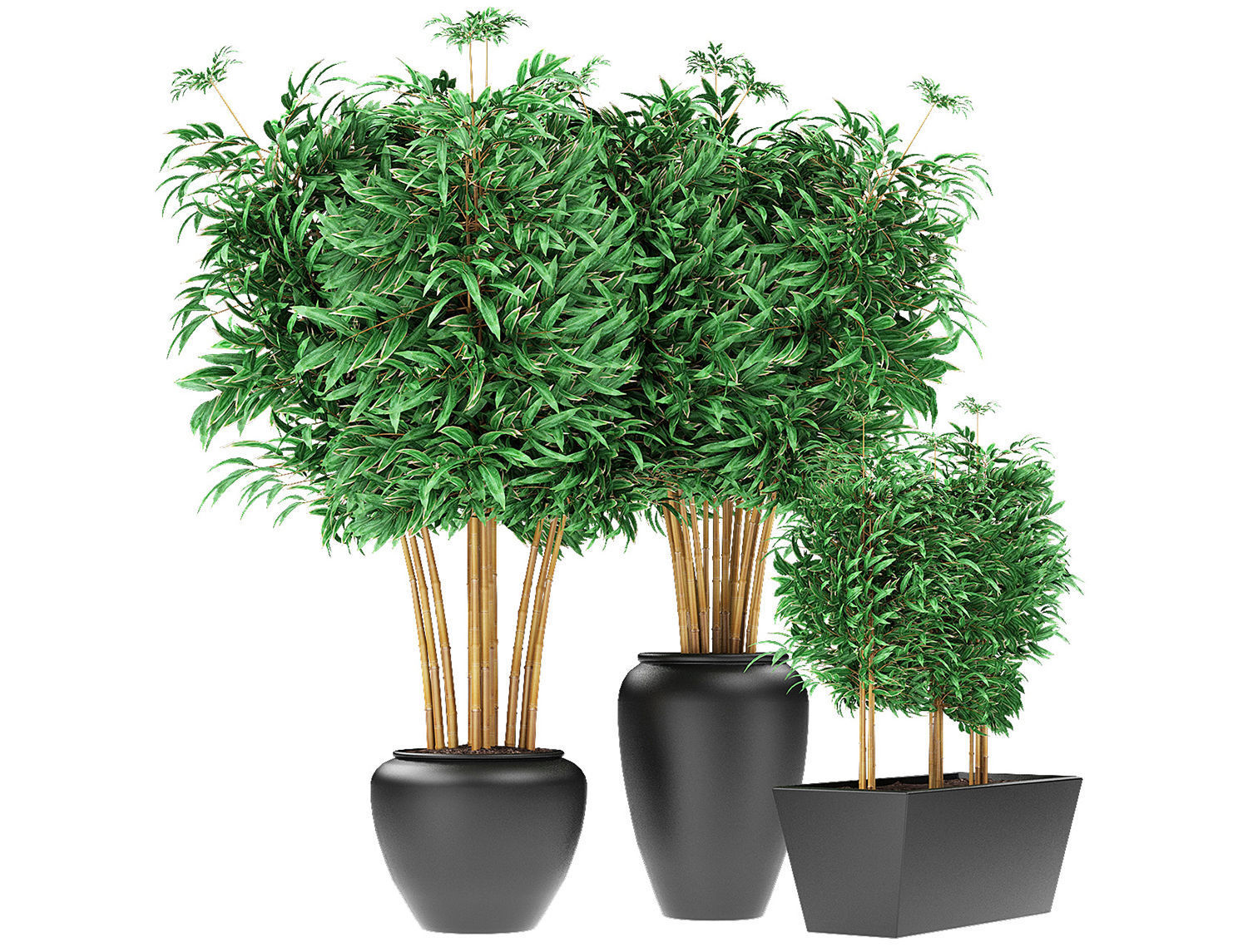 3d Bamboo Plants Exotic Plant Cgtrader