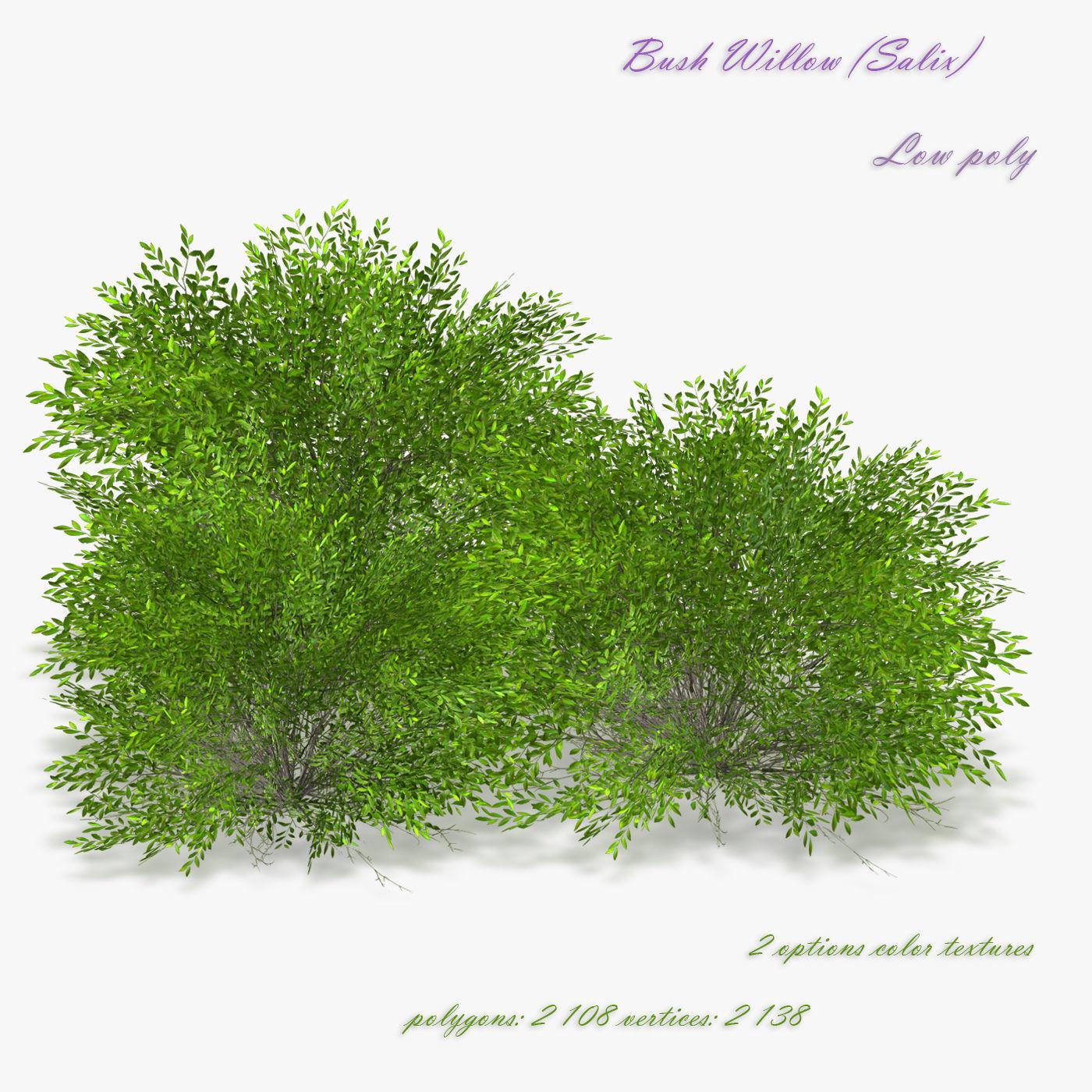 Bush Willow  Salix purpurea Nana