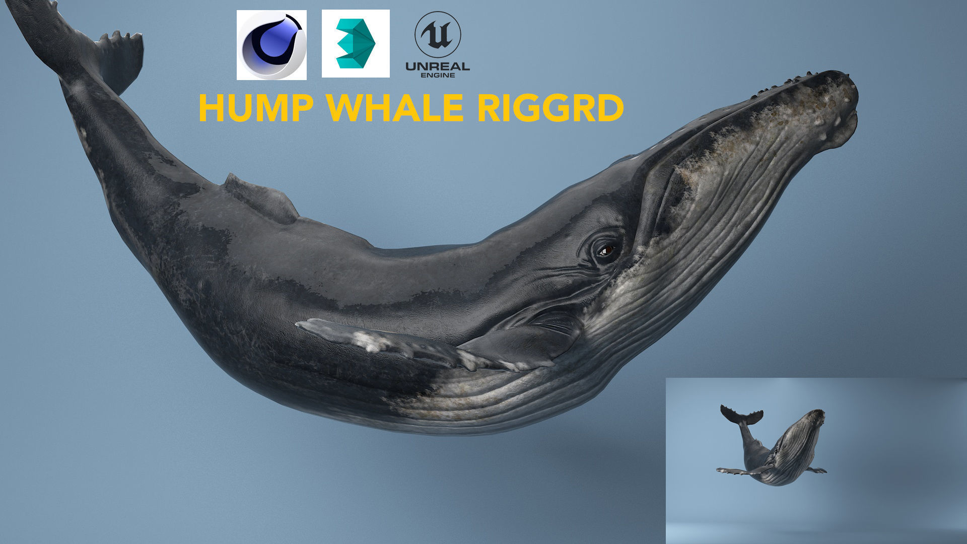 hump whale rigged