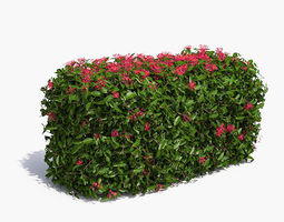 3D Jungle Geranium Hedge Flowering