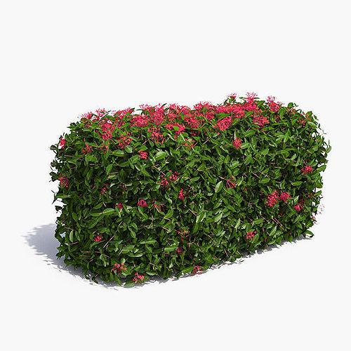 3d Jungle Geranium Hedge Flowering Cgtrader