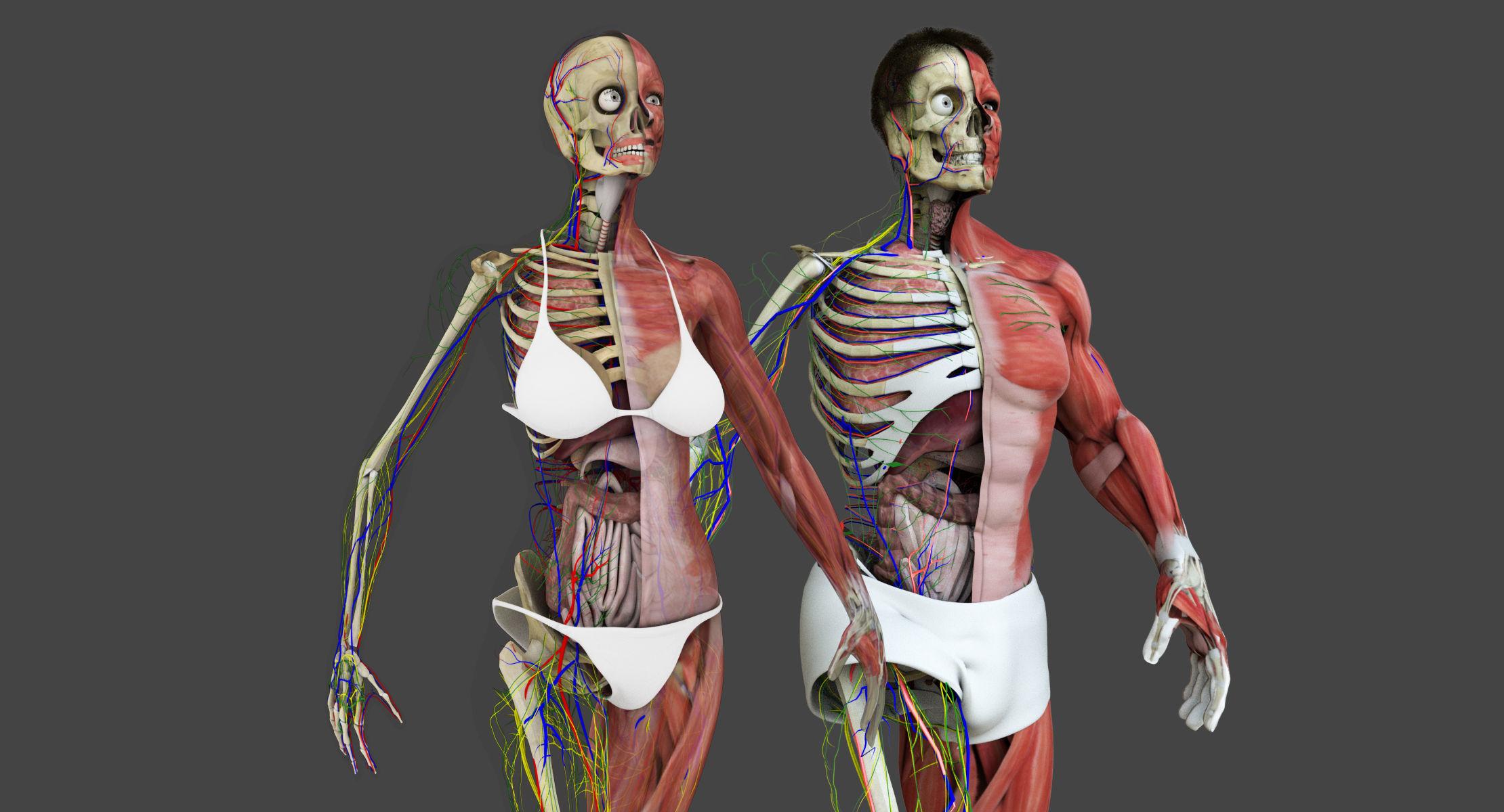 Motion Capture Anatomy Combo