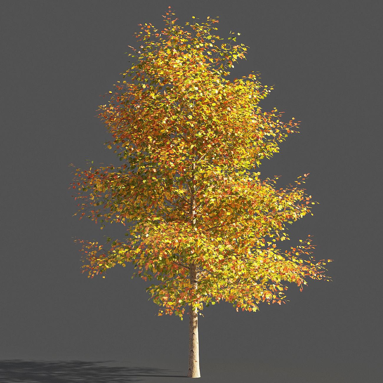 TULIP TREE 2