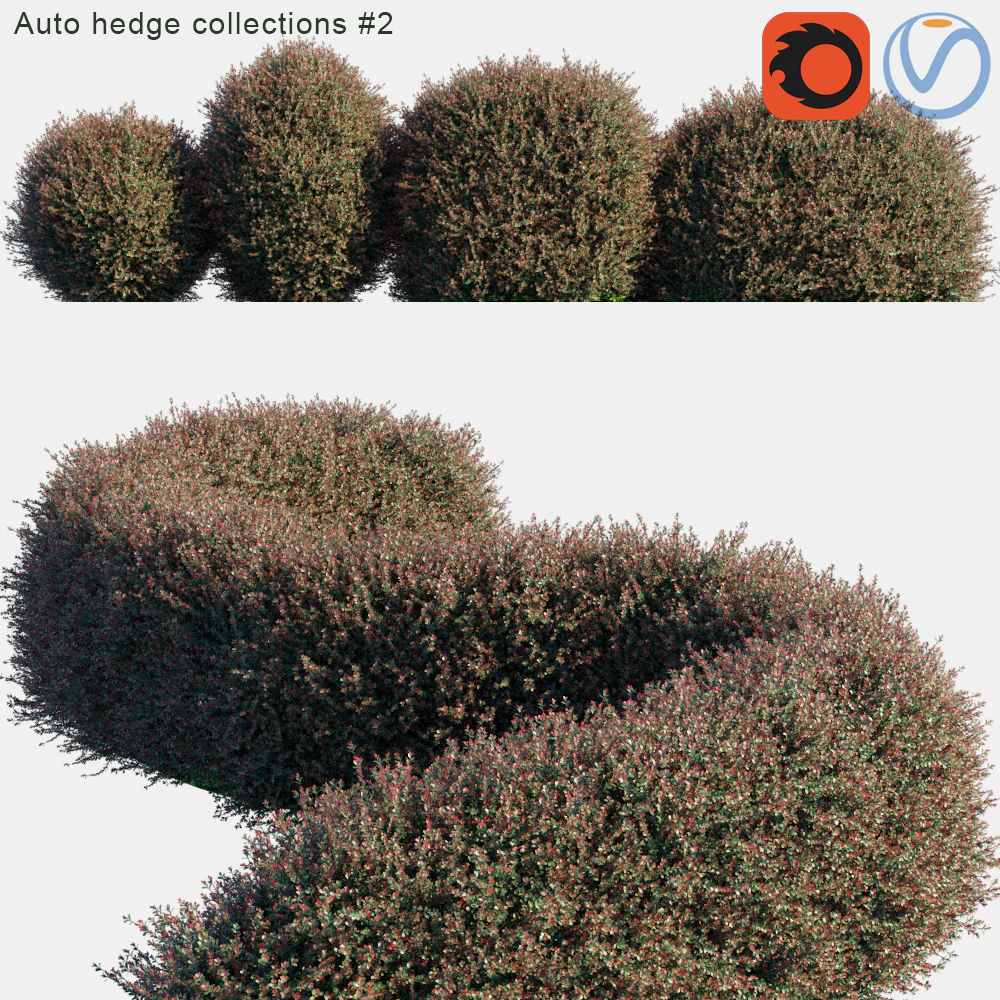 Auto hedge collections 2