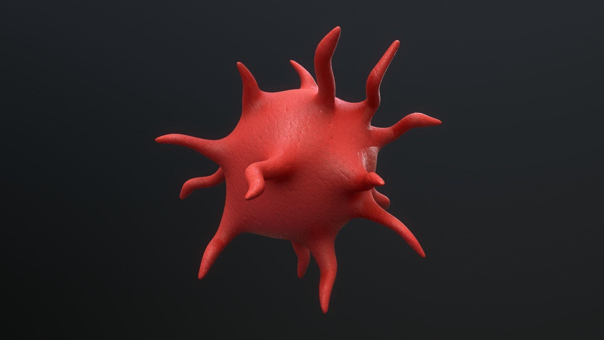 Platelet Thrombocyte