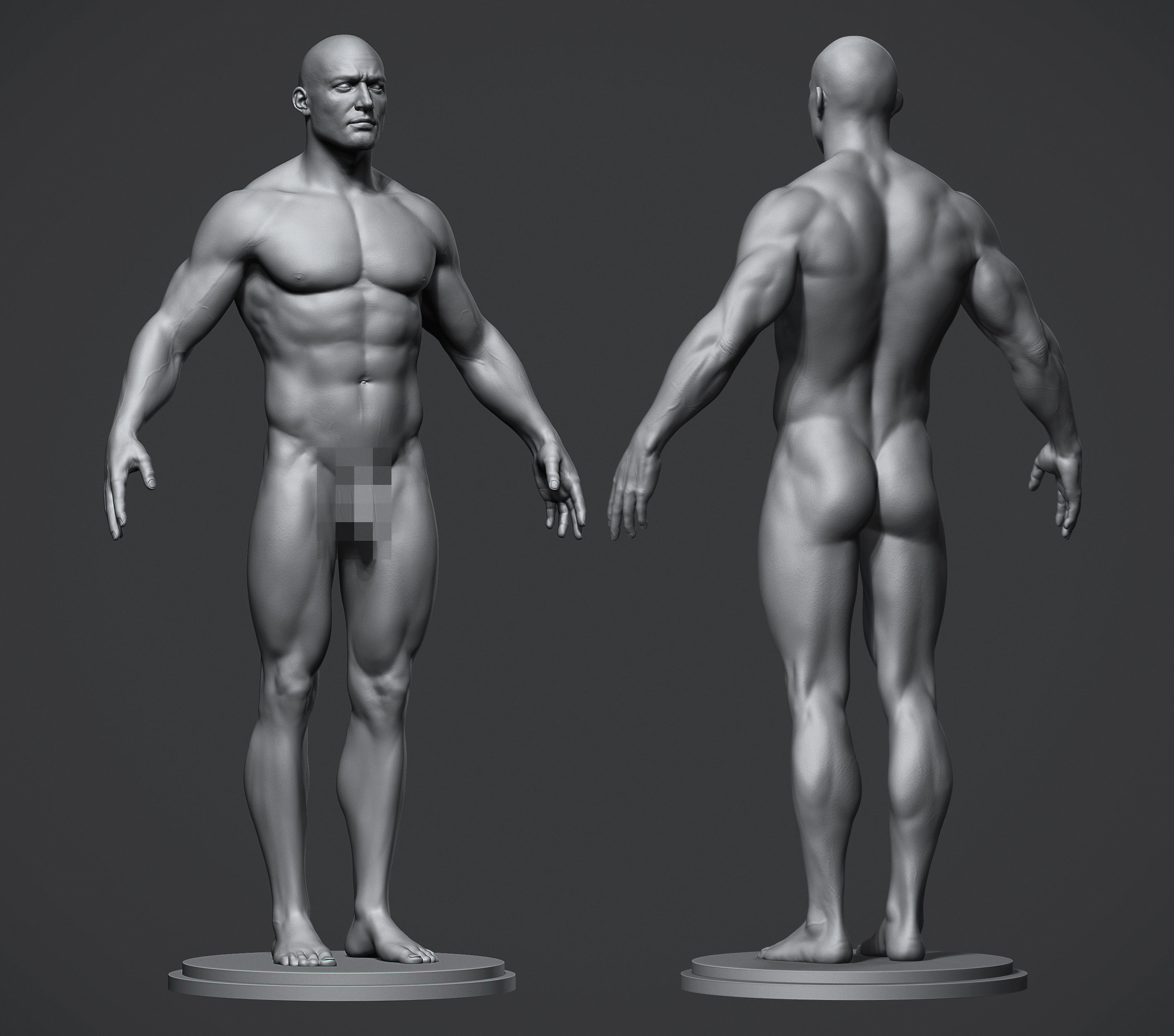 Male Anatomy Reference Model