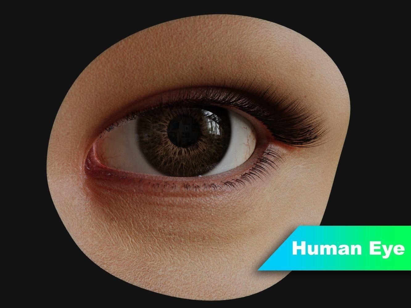 Human Eye with Eyelids