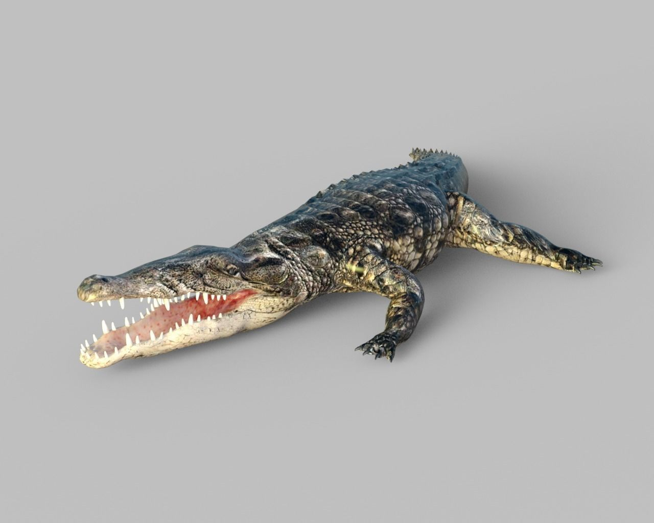 Animated Rigged  Crocodile