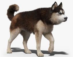 Siberian Husky 2 FUR ANIMATED 3D Model