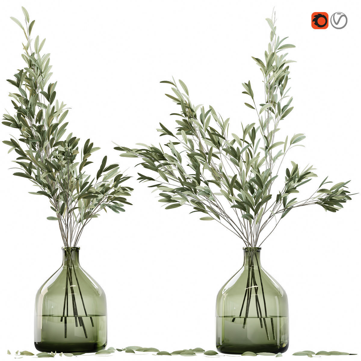 Olive stems in glass vase with water