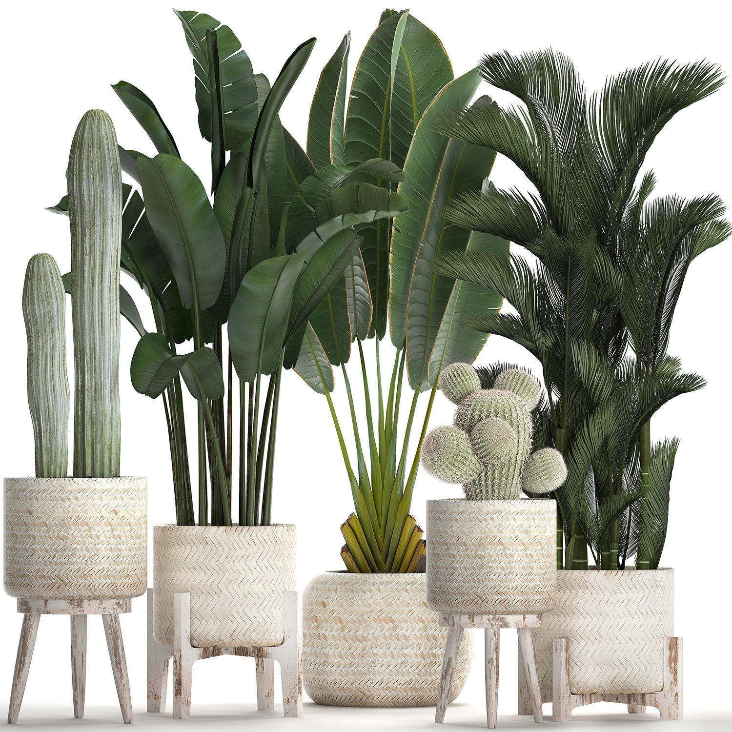 Collection of exotic plants in white pots 426